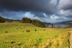 Farm animals in a grassland near a lake Stock Photos