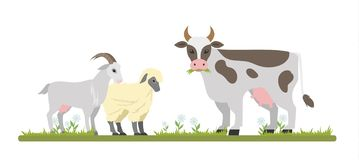 Farm animals graze on the field chewing grass. Farm animals graze on the field. Cute goat, sheep and cow chewing grass. Isolated vector flat illustration stock illustration