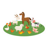 Farm animals grazing in the pasture, grazing on green lawn Stock Photography