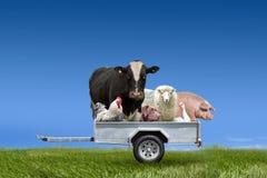 Farm animals in trailer on green field