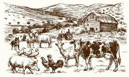 Farm animals. Barn and rural landscape. Farm animals. Hand drawn vector illustration Stock Image