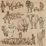 Farm animals. Hand drawn vector pack. royalty free illustration