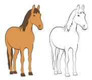 Farm Animals - Horse Royalty Free Stock Photography