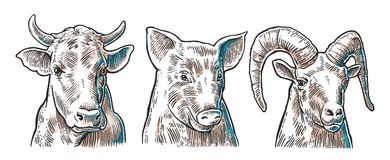 Farm animals icon set. Pig, cow and goat heads isolated on white background. Royalty Free Stock Photography