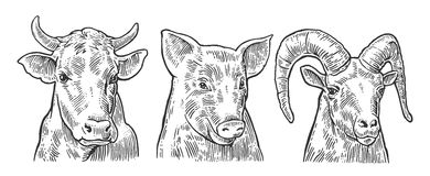 Farm animals icon set. Pig, cow and goat heads isolated on white background. Stock Images