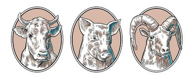 Farm animals icon set. Pig, cow and goat heads isolated on white background. Royalty Free Stock Photos