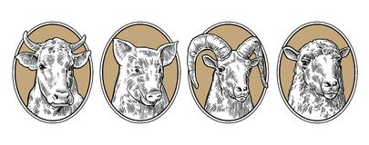 Farm animals icon set. Pig, cow, sheep and goat heads Stock Photos