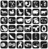 Farm animals icons. Image of black icons of farm animals and natural products Stock Image