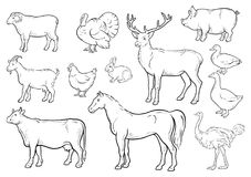 Farm animals icons set. Collection of labels with beautiful such as goat chicken pig boar duck goose horse cow Turkey. Hare ostrich deer butcher shop, steak royalty free illustration