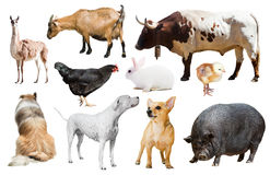 Farm animals. Isolated. Set of dogs and other farm animals. Isolated stock image