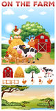 Farm animals living in the farm Royalty Free Stock Photography