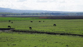 Farm animals on pasture stock video footage