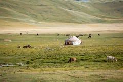 Farm animals pasturing near yurt Royalty Free Stock Photography