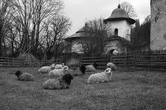 Farm animals resting Royalty Free Stock Photo