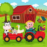 Farm animals ride on the tractor in the yard Stock Photos