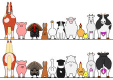 Farm animals in a row, front and back.  royalty free illustration