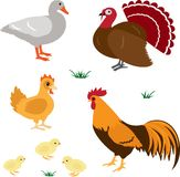 Farm animals set 4. Farm birds vector set isolated on white Royalty Free Stock Photo