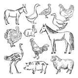 Farm animals set in hand drawn style. Vector illustrations Stock Image