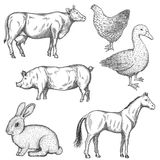 Farm animals set. Stock Photos