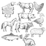 Farm animals set. Hand drawn vector illustration Stock Images