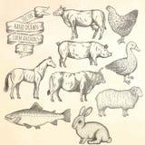 Farm animals set. Royalty Free Stock Photography