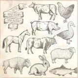 Farm animals set. Stock Images