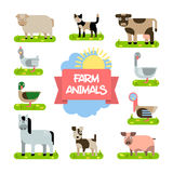 Farm Animals Set. Illustration in Flat Design. Vector Collection of Animals and Birds that Live on the Farm in Trendy Flat Style. Set of Animals Horse, Dog, Cat Royalty Free Stock Photo