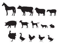 Farm animals  set. Livestock. Royalty Free Stock Image