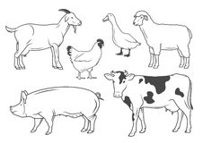 Farm animals. Set of vector drawings of farm animals Royalty Free Stock Photography