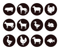 Farm animals set. Vector Stock Photos