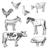 Farm animals. Set of vector sketches Stock Images