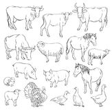 Farm animals. Set of vector sketches on a white background Stock Image