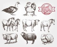 Farm animals. Set of vector sketches on a white background Stock Photo