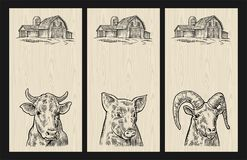 Farm animals set. Pig, cow and goat heads  on white background. Farm animals set for vertical poster template. Pig, cow and goat heads  on wood textured Stock Images
