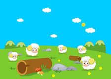 Farm animals with sheeps Royalty Free Stock Images