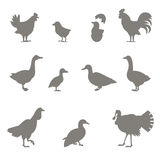 Farm animals. Silhouettes of chickens. Royalty Free Stock Photography