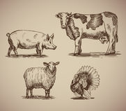 Farm animals in sketch style compilation. Illustration livestock drawn by hand. Cow, sheep, pig and turkey on gray background Stock Image