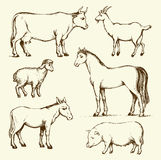 Farm animals. Vector drawing. Cute old animals standing in farmland pasture field  on white background. Freehand outline ink hand drawn background sketchy in art Stock Photos