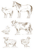 Farm Animals. Vector set of farm animals: pig, horse, duck, cow, sheep and chicken; in hand-drawn sketched style royalty free illustration