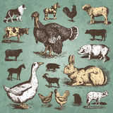 Farm animals vintage set (vector). Set of farm animals antique engravings; scalable and editable vector illustration vector illustration