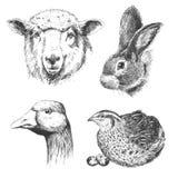 Farm animals vintage set, vector. Stock Photo