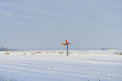 Farm animals in winter landscape Royalty Free Stock Images