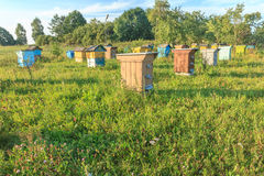 Farm apiary with multicolor beehouses Stock Photo