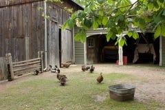 Farm backyard with fowl Royalty Free Stock Photo