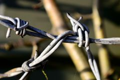 The farm barbed wire. Royalty Free Stock Photo