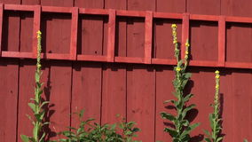 Farm barn wooden wall and ladder stock video footage