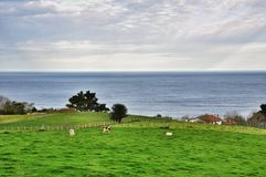 Farm in the Bay of Biscay. San Sebastian. Spain Royalty Free Stock Images