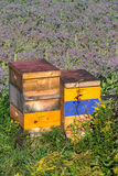 Farm Beehives Royalty Free Stock Images