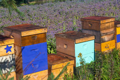 Farm Beehives Stock Images