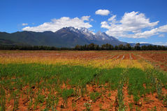 Farm below a snow moutain. This farm located in Lijiang, Yunnan, China, with beautiful yulong snow moutain Stock Photos